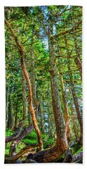 Crooked Trees Of Mt Roberts Beach Towel