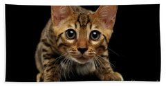 Crouching Bengal Kitty On Black  Beach Towel by Sergey Taran