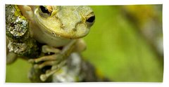 Cuban Tree Frog 000 Beach Sheet by Chris Mercer