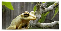 Beach Towel featuring the photograph Cuban Tree Frog 001 by Chris Mercer