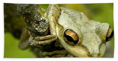 Beach Towel featuring the photograph Cuban Tree Frog  by Chris Mercer