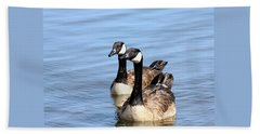 Beach Towel featuring the photograph Curious Canda Geese by Sheila Brown