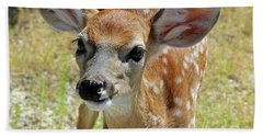 Curious Fawn Beach Sheet by Inspirational Photo Creations Audrey Woods