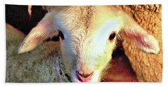 Curious Newborn Lamb Beach Sheet