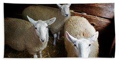 Curious Sheep Beach Towel