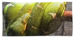 Beach Towel featuring the photograph Curly by Beth Saffer