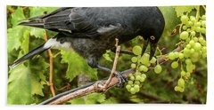 Currawong On A Vine Beach Towel