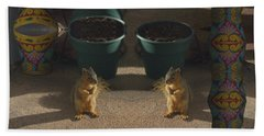 Cute Baby Squirrels On The Porch Beach Towel