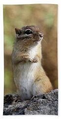 Cute Chipmunk Beach Sheet