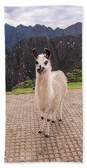 Cute Llama Posing For Picture Beach Towel