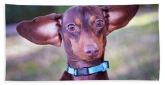 Dachshund Ears Up Beach Towel by Stephanie Hayes