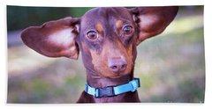 Dachshund Ears Up Beach Sheet
