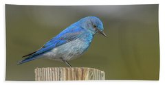Daddy Bluebird Guarding Nest Beach Towel