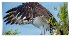 Daddy Osprey On Guard Beach Towel