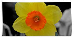 Daffodil Delight  Beach Sheet