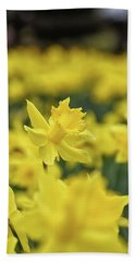 Daffodil Beach Sheet