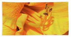 Daffodil - Peeping Tom 06 Beach Towel