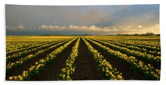 Beach Towel featuring the photograph Daffodil Storm by Mike Dawson