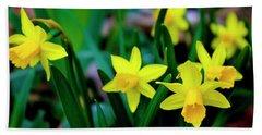 Daffodils A Symbol Of Spring Beach Sheet