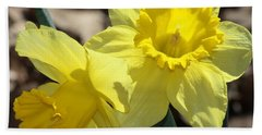 Beach Towel featuring the photograph Daffodils In Spring by Sheila Brown