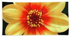 Dahilias Flower Up Close Beach Sheet