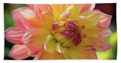 Dahlia In The Sunshine Beach Sheet by Phil Abrams