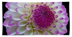 Dahlia Fine Art On Black Beach Towel