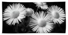 Beach Towel featuring the photograph Daisy Flowers Black And White by Christina Rollo