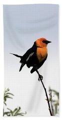 Beach Towel featuring the photograph Dancing Blackbird by Shane Bechler