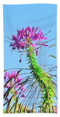 Beach Towel featuring the photograph Dancing Cleome by Debbie Stahre