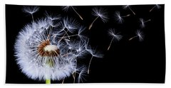 Dandelion Blowing On Black Background Beach Sheet by Bess Hamiti