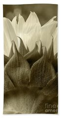 Dandelion In Sepia Beach Towel