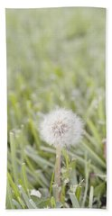 Beach Sheet featuring the photograph Dandelion In The Grass by Cindy Garber Iverson