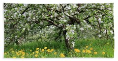 Dandelions And Apple Blossoms Beach Sheet
