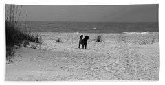 Beach Sheet featuring the photograph Dandy On The Beach by Michiale Schneider
