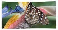 Beach Towel featuring the photograph Dark Blue Tiger Butterfly - 1 by Paul Gulliver