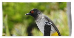 Beach Towel featuring the photograph Dark-capped Bulbul by Betty-Anne McDonald