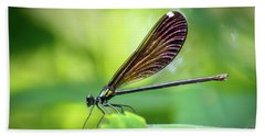 Beach Towel featuring the photograph Dark Damsel by Bill Pevlor