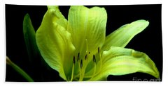Day Lily At Night Beach Sheet by Barbara S Nickerson