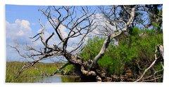 Dead Cedar Tree In Waccasassa Preserve Beach Sheet