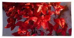 December Burning Bush Beach Towel by Anastasia Savage Ealy