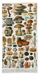 Decorative Print Of Champignons By Demoulin Beach Towel by American School