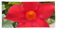 Mandevilla Deep Red Flower Beach Sheet