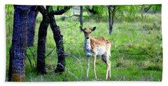 Deer Curiosity Beach Sheet by Kathy White