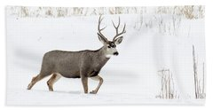 Beach Towel featuring the photograph Deer In The Snow by Rebecca Margraf