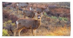 Beach Towel featuring the photograph Deer In The Sunlight by Darren White