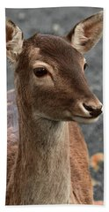 Deer Portrait Beach Towel