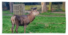 Deer Spotted At Richmond Park  Beach Towel