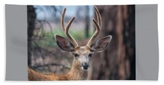 Deer Stare Beach Towel