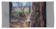 Deer Stare Beach Towel